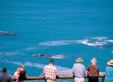 001Whale-watching-at-Head-of-Bight