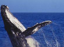 Fauna; Whales;